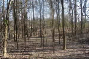 Timber and Hunting Tract in Prairie, AR (30 of 44)