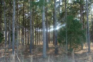 Timber and Hunting Tract in Prairie, AR (3 of 44)