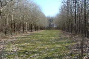 Timber and Hunting Tract in Prairie, AR (15 of 44)