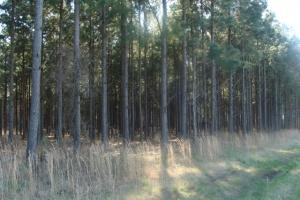 Timber and Hunting Tract in Prairie, AR (2 of 44)