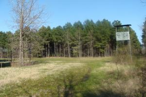 Timber and Hunting Tract in Prairie, AR (12 of 44)