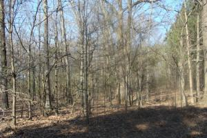 Timber and Hunting Tract in Prairie, AR (11 of 44)