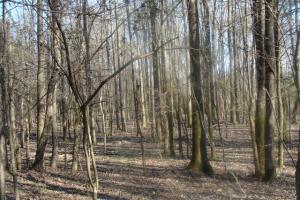 Timber and Hunting Tract in Prairie, AR (31 of 44)