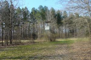 Timber and Hunting Tract in Prairie, AR (17 of 44)
