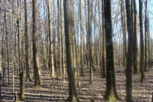 Timber and Hunting Tract in Prairie, AR (32 of 44)