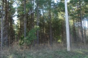 Timber and Hunting Tract in Prairie, AR (40 of 44)