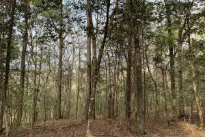Conecuh River Hunting & Timber Investment in Covington, AL (18 of 19)