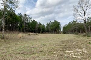 Conecuh River Hunting & Timber Investment in Covington, AL (16 of 19)