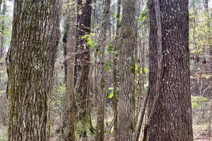 Conecuh River Hunting & Timber Investment in Covington, AL (2 of 19)