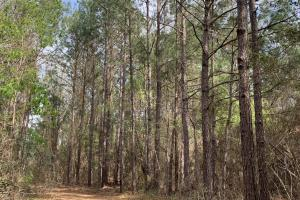 Conecuh River Hunting & Timber Investment in Covington, AL (5 of 19)
