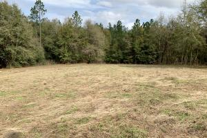 Conecuh River Hunting & Timber Investment in Covington, AL (6 of 19)