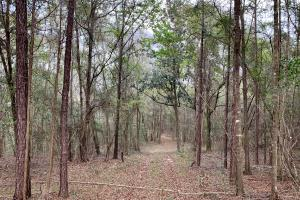 Conecuh River Hunting & Timber Investment in Covington, AL (7 of 19)