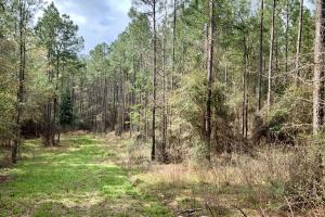 Conecuh River Hunting & Timber Investment in Covington, AL (10 of 19)