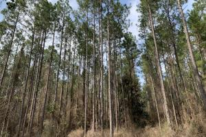 Conecuh River Hunting & Timber Investment in Covington, AL (9 of 19)