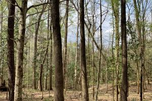 Conecuh River Hunting & Timber Investment in Covington, AL (11 of 19)