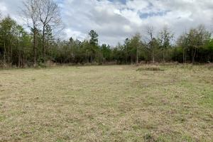 Conecuh River Hunting & Timber Investment in Covington, AL (15 of 19)