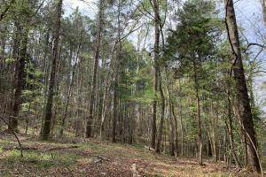 Conecuh River Hunting & Timber Investment in Covington, AL (17 of 19)