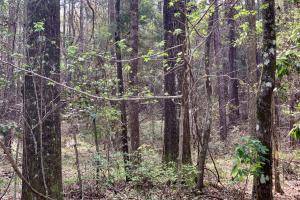 Conecuh River Hunting & Timber Investment in Covington, AL (13 of 19)
