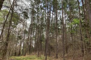 Conecuh River Hunting & Timber Investment in Covington, AL (14 of 19)