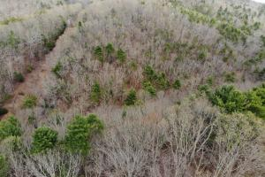 14 Acres in McCoy Minutes from Blacksburg in Montgomery, VA (10 of 12)