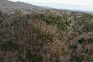 14 Acres in McCoy Minutes from Blacksburg in Montgomery, VA (11 of 12)