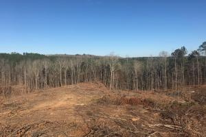 Jackson Road Hunting Tract in Lamar, AL (1 of 8)