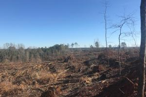 Jackson Road Hunting Tract in Lamar, AL (7 of 8)