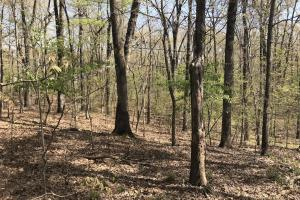 1.61 Acres Near White River & White River National Wildlife Refuge in Arkansas, AR (8 of 14)