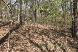 1.61 Acres Near White River & White River National Wildlife Refuge in Arkansas, AR (12 of 14)
