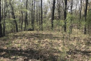 1.61 Acres Near White River & White River National Wildlife Refuge in Arkansas, AR (4 of 14)