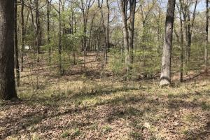 1.61 Acres Near White River & White River National Wildlife Refuge in Arkansas, AR (10 of 14)