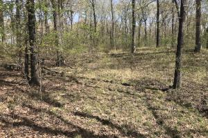 1.61 Acres Near White River & White River National Wildlife Refuge in Arkansas, AR (3 of 14)