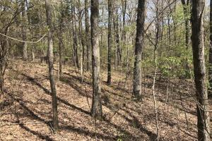 1.61 Acres Near White River & White River National Wildlife Refuge in Arkansas, AR (7 of 14)