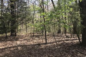 1.61 Acres Near White River & White River National Wildlife Refuge in Arkansas, AR (9 of 14)