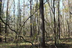 Big Swamp Creek Hunting & Timber Tract in Lowndes, AL (12 of 16)