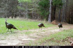 Big Swamp Creek Hunting & Timber Tract in Lowndes, AL (16 of 16)