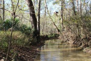 Big Swamp Creek Hunting & Timber Tract in Lowndes, AL (11 of 16)