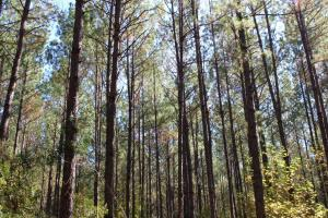 Big Swamp Creek Hunting & Timber Tract in Lowndes, AL (14 of 16)