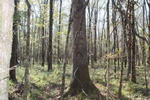 Big Swamp Creek Hunting & Timber Tract in Lowndes, AL (10 of 16)