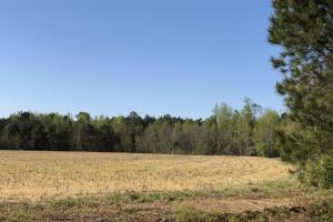 Farmland and Investment Property in Dorchester, SC (4 of 8)