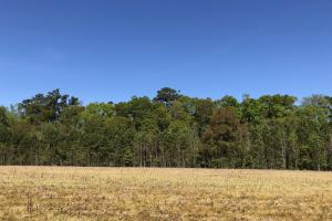 Farmland and Investment Property in Dorchester, SC (7 of 8)