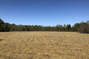 Farmland and Investment Property in Dorchester, SC (6 of 8)