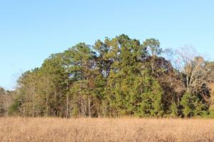 Catoma Creek Timber, Hunting, and Recreation in Montgomery, AL (5 of 7)