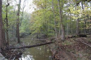 Catoma Creek Timber, Hunting, and Recreation in Montgomery, AL (4 of 7)