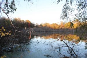 Catoma Creek Timber, Hunting, and Recreation in Montgomery, AL (2 of 7)