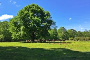 Barrytown Farm and Recreational Retreat in Choctaw, AL (14 of 55)