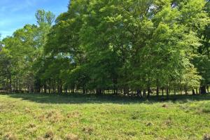 Barrytown Farm and Recreational Retreat in Choctaw, AL (23 of 55)