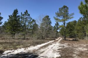 Braxton Edge Hunting Land  in Bladen, NC (5 of 11)