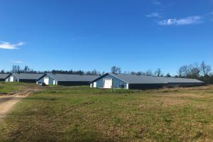 Williston Poultry Farm - Barnwell County SC