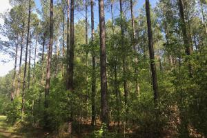 Savannah Creek Rec Tract A - Berkeley County SC